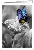 With deepest sympathy, Butterfly card