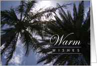 Warm Wishes - Holiday, Christmas, New Years Day - Palm Trees on a Sunny Day card