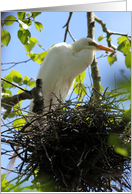 Your Baby Will be Here Soon, Snowy Egret with Nest Photo card