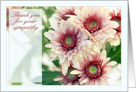 Thank you for your sympathy, pink daisies / chrysanthemums card