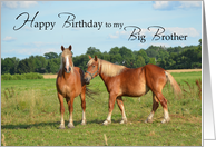 Big Brother Birthday, Horses card