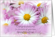 Congratulations on the birth of your new Granddaughter, pink daisies card