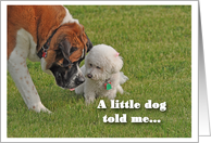 Birthday, Saint Bernard and Bichon, A little dog told me... card