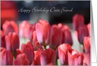 Happy Birthday Dear Friend, Red Tulips card