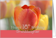 Granddaughter 18th Birthday, Orange and yellow tulips card
