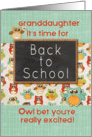 Granddaughter Back to School Colorful Owls and Chalkboard card