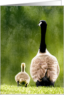 Goose and Gosling Adorable Photograph Blank Note Card