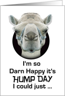 Hump Day Funny Camel Just Spit card