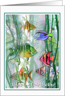 Birthday tropical Fishes, Colorful Birthday ART card