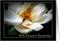 Deepest Sympathy, Magnolia in Bloom card