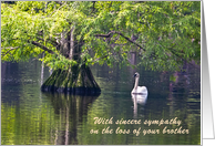 Sympathy loss of Brother, pond cypress tree & Swan card