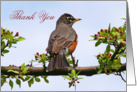 Robin Thank You In Flowering Tree Card
