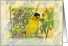 Gold Finch on Lemon Balm Blank Note Card
