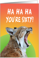 60th birthday wildcat screaming,ha ha ha, you're sixty,orange,green, card