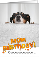 Mom Humorous Birthday Card - Dog Peeking Over Table card