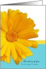Thinking of You Neighbor, Trendy Summer Blue And Yellow Daisy card