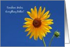 Cheerful Get Well, Bright Yellow Sunflower In The Sunshine card