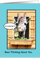 Funny Thinking Of You, Cute Giraffe Just Popping In Through Window card
