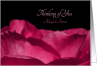 Thinking of You Always And Forever, Romatic Pink Rose Petals card