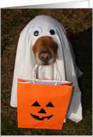Happy Halloween, Did Someone Say Treats? Dog in Ghost Costume card