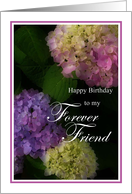 Happy Birthday Forever Friend, Pretty Hydrangia Card