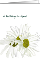 Birthday in April, daisy birth month flower, pretty white daisies card