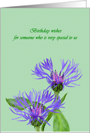 Birthday for surrogate mother, pretty mountain bluet flowers card