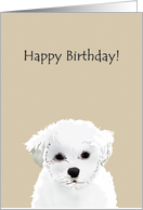 Birthday, sketch of a cute Bichon Frise puppy card