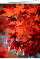 Thanksgiving - Radiant Red Fall Leaves card