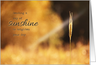 Ray of Sunshine - Note Card