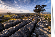 Limestone Pavement and lone tree - The Yorkshire Dales - Blank card