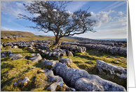 The Yorkshire Dales - Limestone pavement & lone tree - Blank card