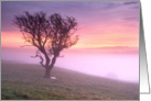 Lone tree and pink misty sunrise - Blank card