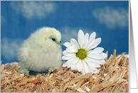Mother's Day - Baby Chick with Daisy card