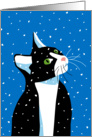 Merry Christmas, White and Black Cat Watching Snowflakes card