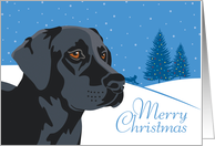 Happy Holidays, From Our Pack to Yours, Black Labrador Retriever card