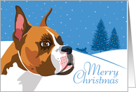 Happy Holidays, From Our Pack to Yours, Boxer, Snowflakes card