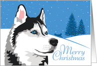 Happy Holidays, From Our Pack to Yours, Siberian Husky, Snowflakes card