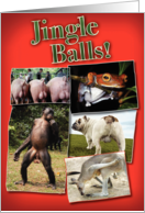 Jingle Balls Funny Card
