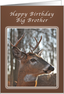 Birthday Wishes for a Big Brother, Deer, whitetail buck card
