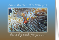 Little Fish with a Big Happy Birthday Wish, for a Little Brother, Fish card