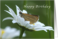 Happy Birthday, Butterfly Resting in a Daisy card