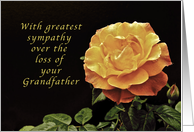 Sorry, for the Loss of Your Grandfather, yellow orange rose card
