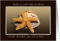 Happy Birthday, Little Brother, You are A star, Starfish and Shell card