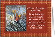 Happy Birthday to a Little Brother, Clown Fish with Gingham backdrop card