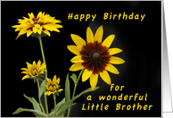 Happy Birthday Little Brother, Rudbeckia flowers card