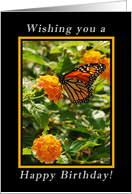 Happy Birthday Wishes, Monarch Butterfly on Milkweed Blossoms card