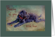Labradoodle Puppy - Thinking of you - blank inside card