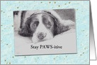 Get Well Dog Portrait Dog with Cancer card