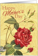 Red Rose With Buds on Yellow Happy Mother's Day card
